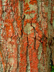 Bark Texture 1236486 by StockProject1