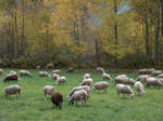 Sheep Field 1264662