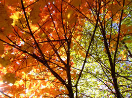 Fall Colors 1575353 by StockProject1