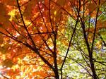 Fall Colors 1575353
