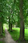 Green Trees 2511615