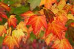 Autumn Changes 4895522
