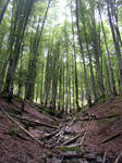 Spanish Forest 6164424