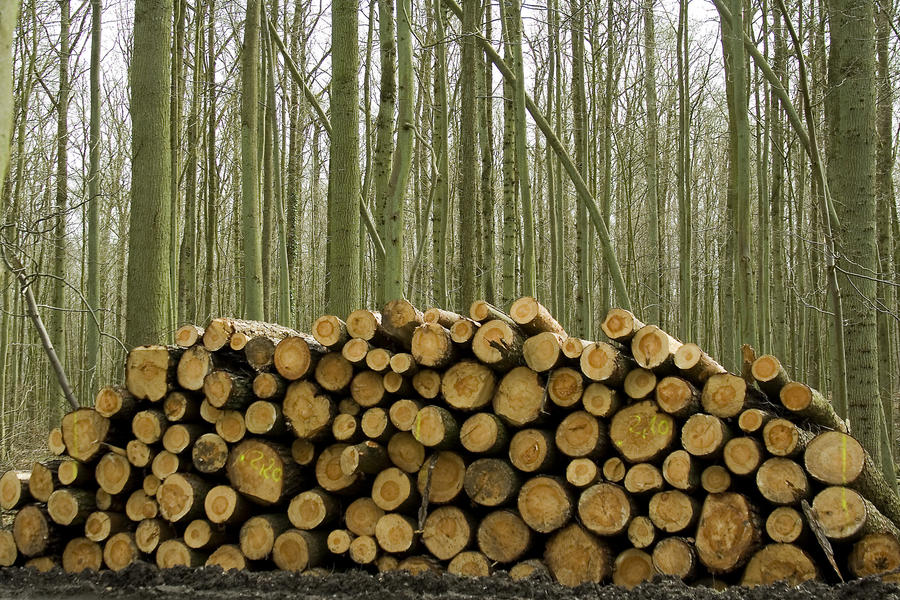 analysis wood pile Piles, wood and environment protection | researchgate, the professional  network  cost analysis is conducted to assess the feasibility of the proposed  system.