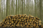 Wood Pile 6979706