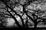 Tree Silhouette 7297988