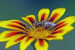 Bright Flower 8378610