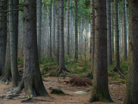 Frightening Forest 10714230