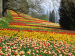 Flourishing Fields 13508524