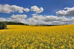 Scenic Field 14031637