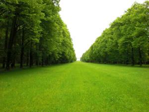 Green Pasture 15345928