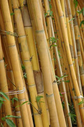 Tilted Bamboo 15394872