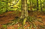 Tree Roots 16926316