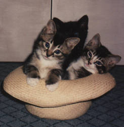 Cats in a hat
