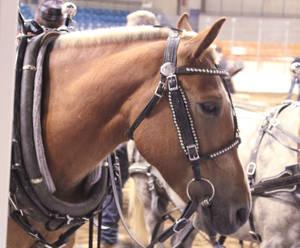 A Pony Portrait