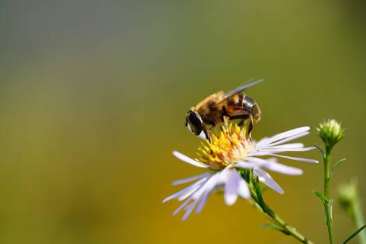 Honey Harvester I