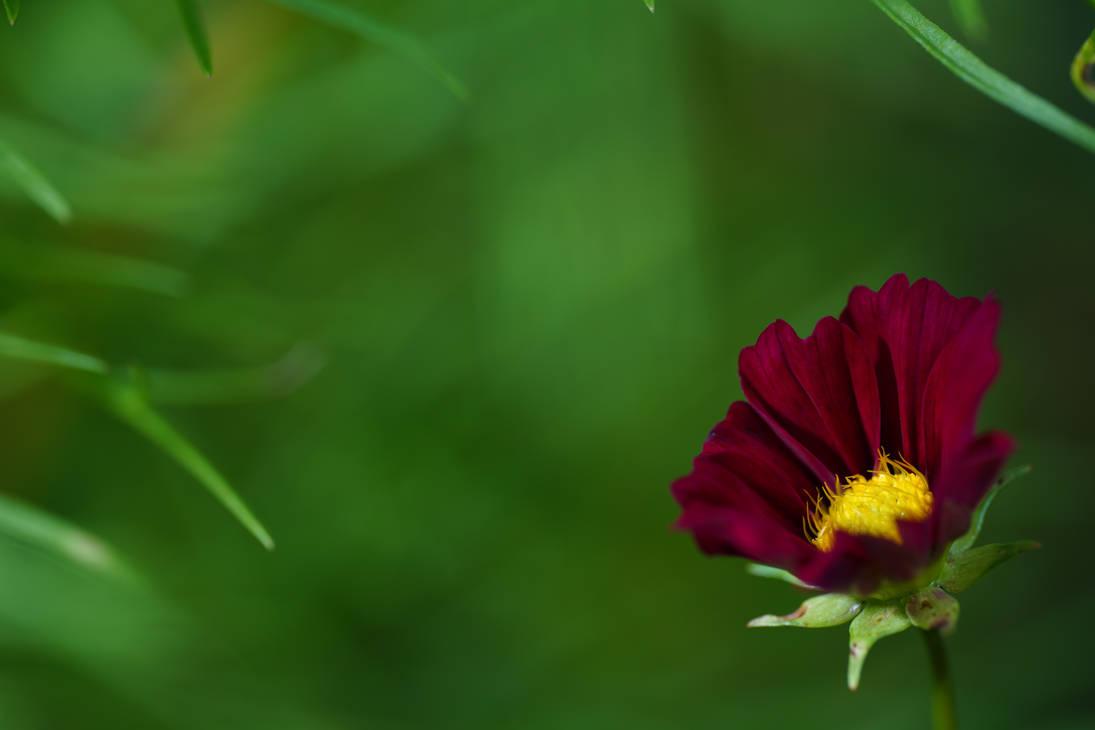 Red Flower under Green