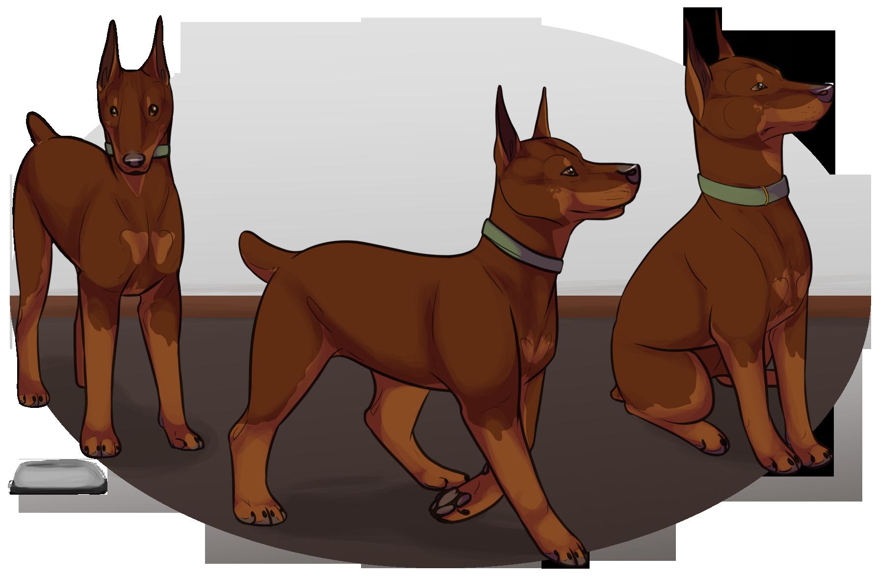 Puppy Training Program - Jack by Canidae-Mayhem