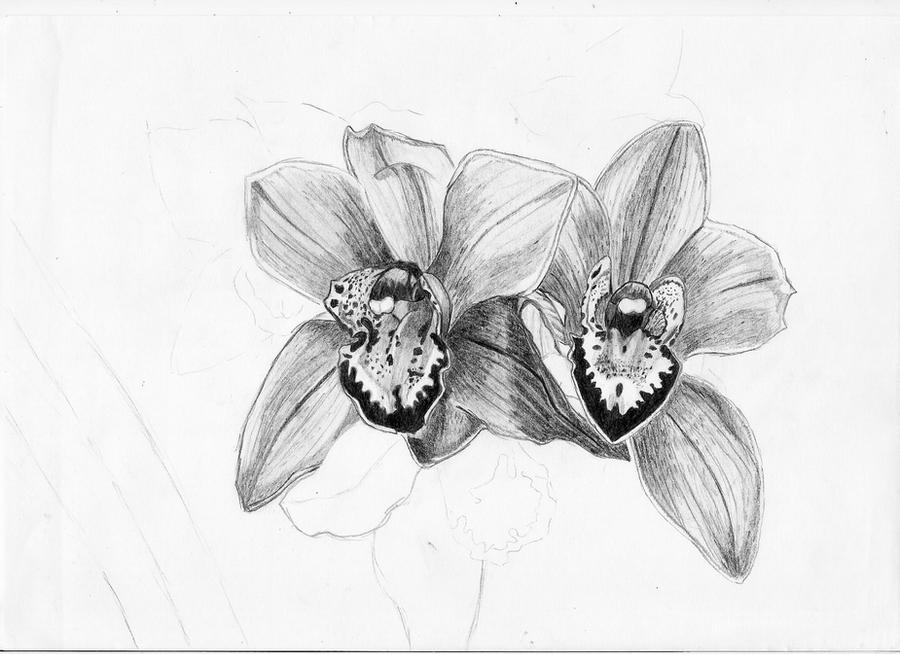 Orchid sketch by pktommy on DeviantArt  Orchid sketch b...