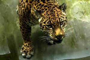 Jaguar by BluChickenNinja