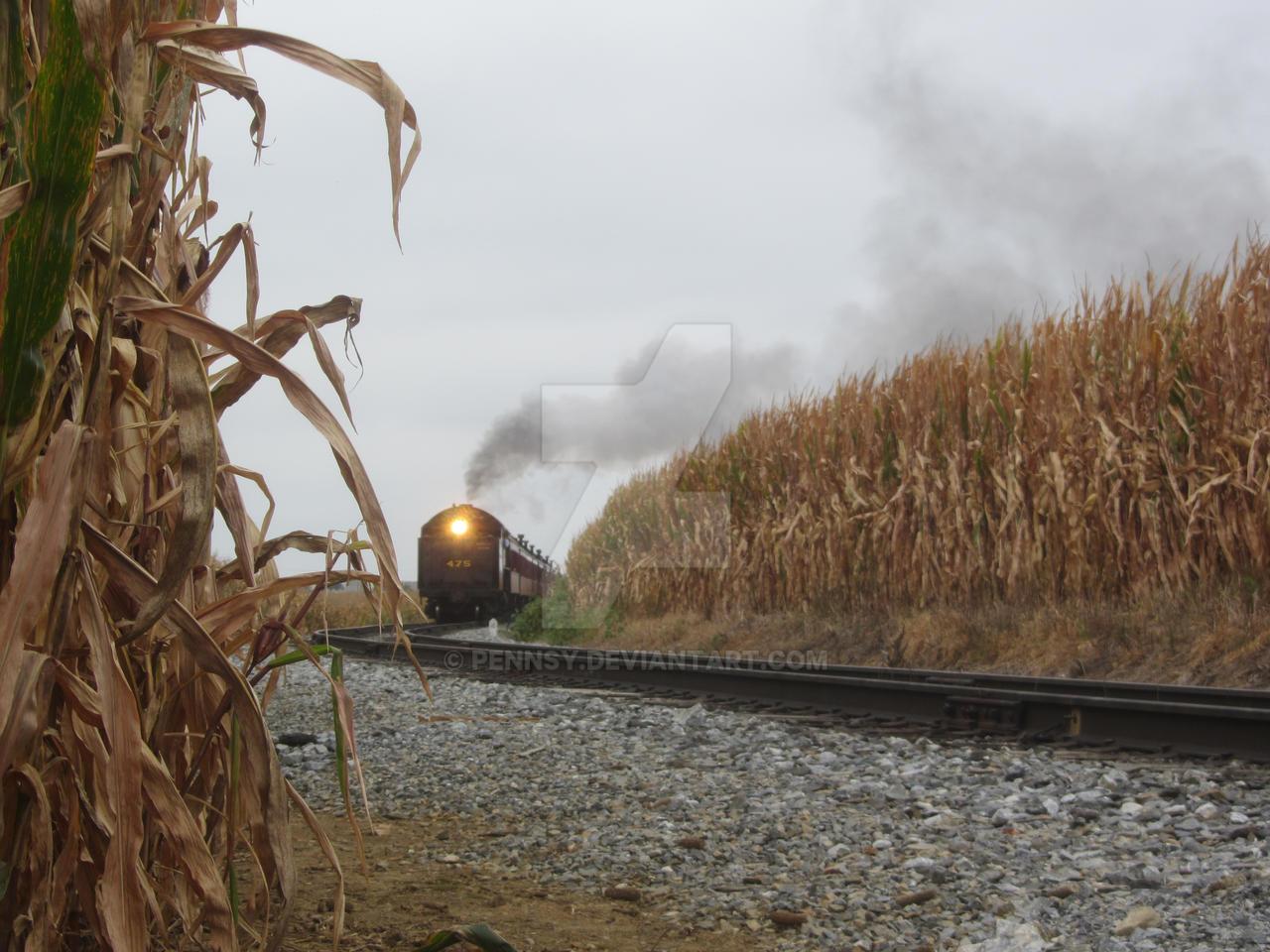 Through the cornfields