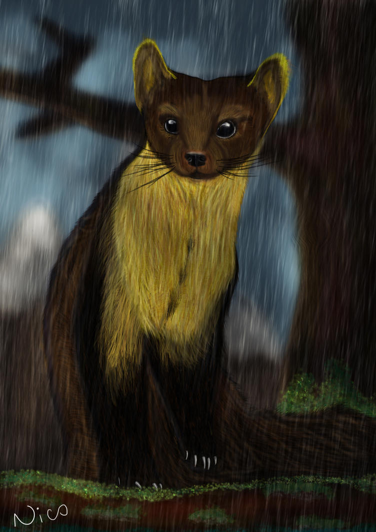 Irish Pine Marten by DropkickNicos