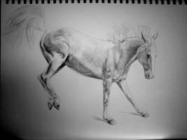 Dappled by ponylov
