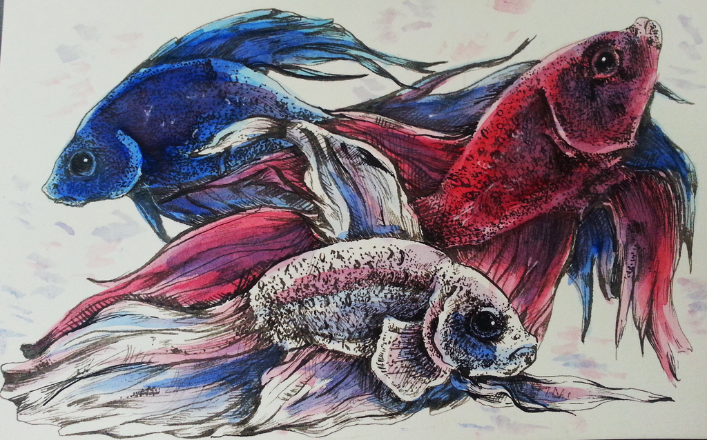 Patriotic Beta Fish by Finch-of-Whimsy
