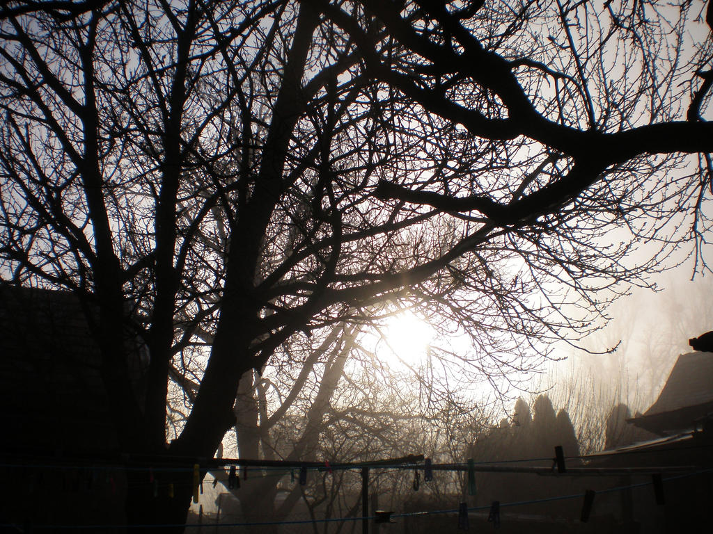 Morning Myst by llallogan