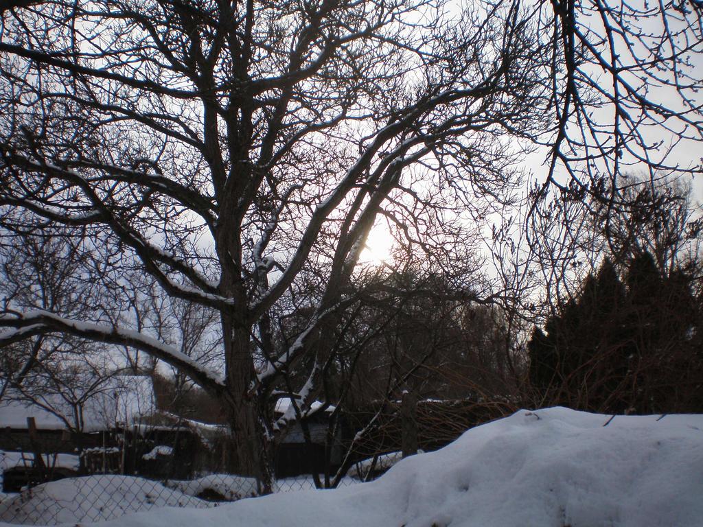 January Sun by llallogan
