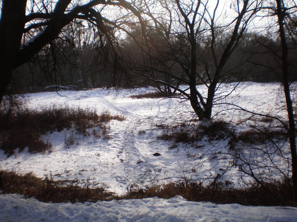 Snowsteps by llallogan