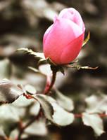 Pinkening