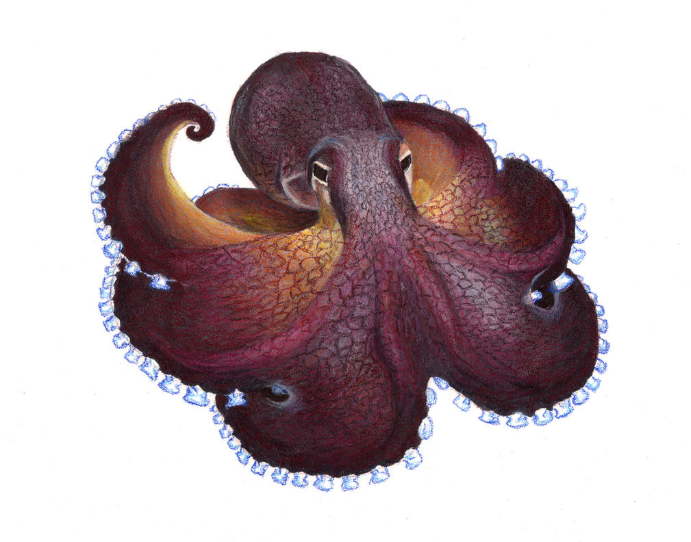 Coconut Octopus by HalfBloodDragon