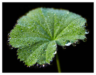 'morning dew by bagoon
