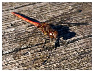 dragonfly'01 by bagoon