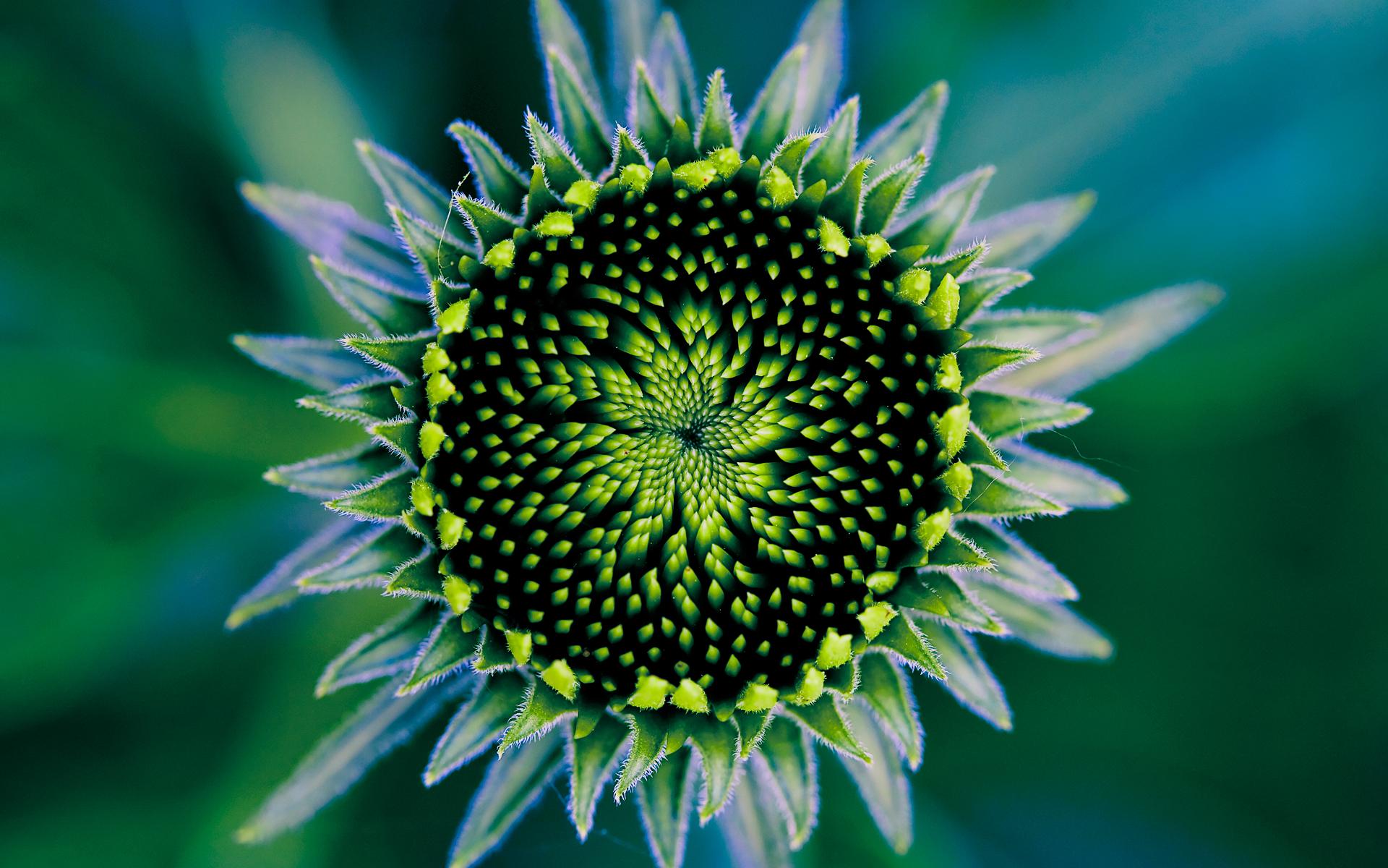 Floral Nebula by MehranMo