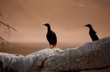 Two Birds by MehranMo