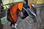 Fruit Bat : Yawn