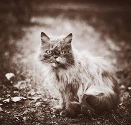 cat by amsterdam-jazz