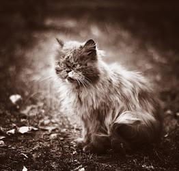 street cat by amsterdam-jazz