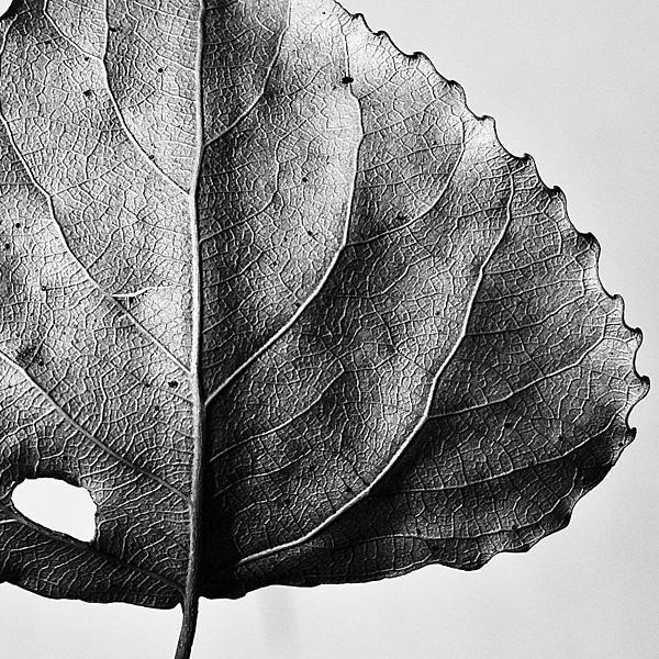 autumn details by amsterdam-jazz