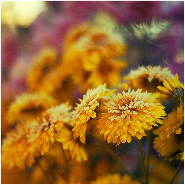 Dear Autumn by amsterdam-jazz