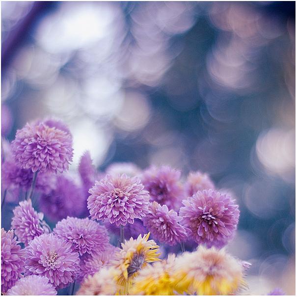 Dear Autumn II by amsterdam-jazz