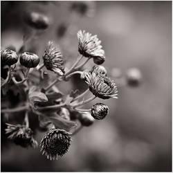 Dear Autumn III by amsterdam-jazz