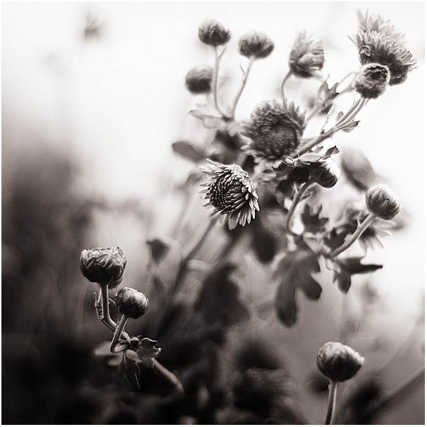 Dear Autumn IV by amsterdam-jazz