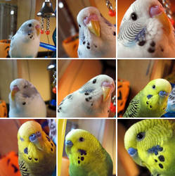 The Many Feathered Faces