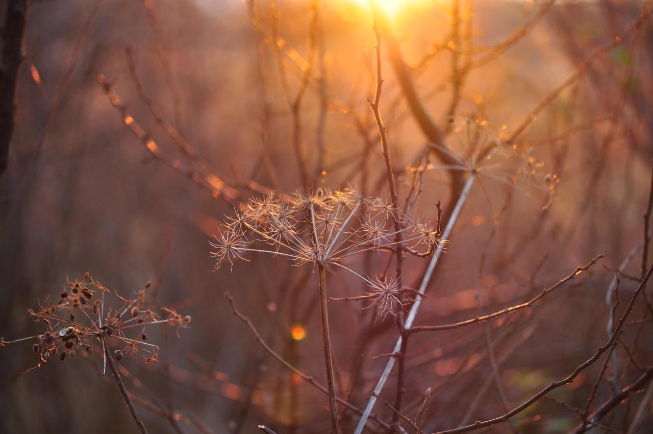 Light by Saishuu-Karasu