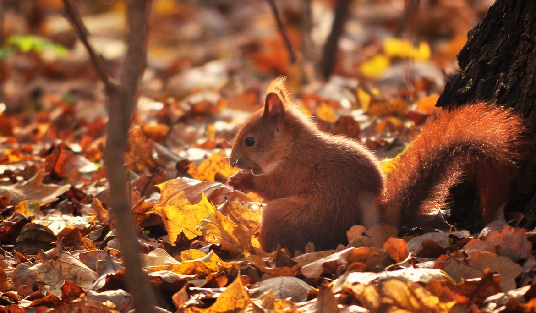 Squirrel by Saishuu-Karasu