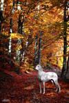 Autumn II by Misslulu07