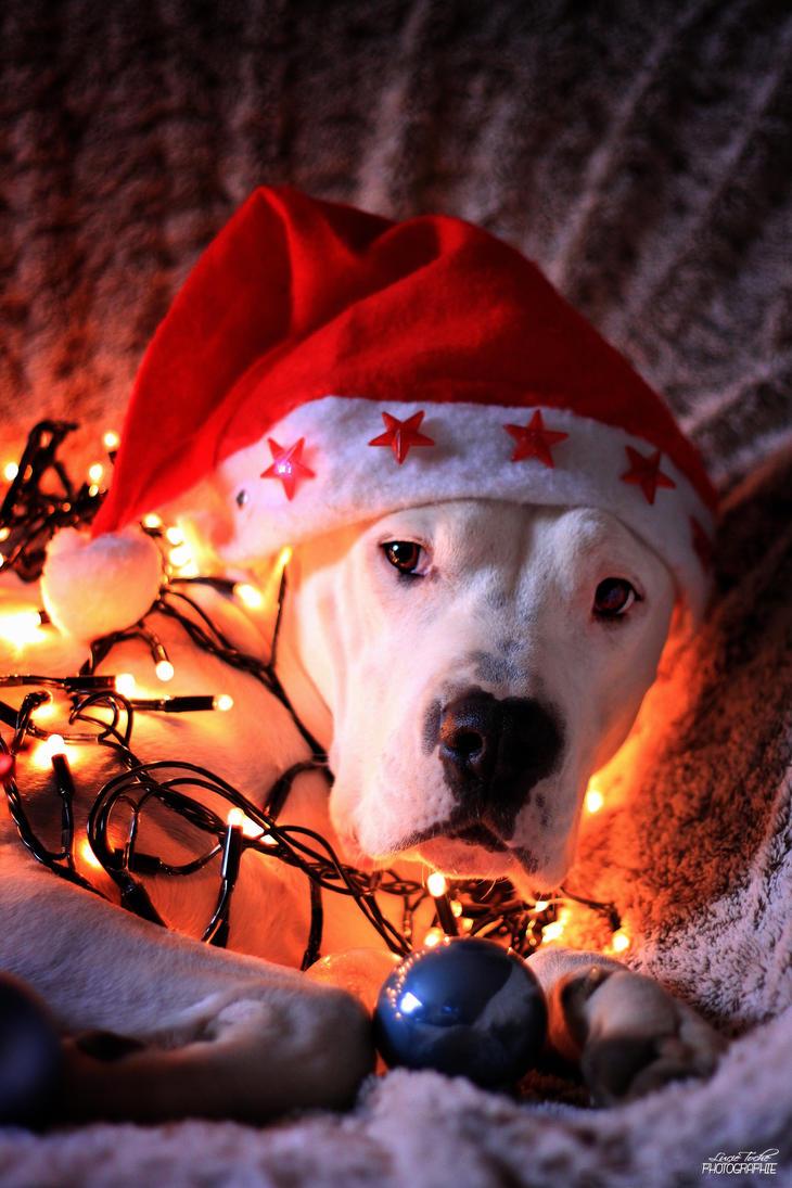 Merry Christmas by Misslulu07